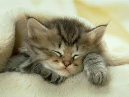 cat-nap-images0qthu7hy